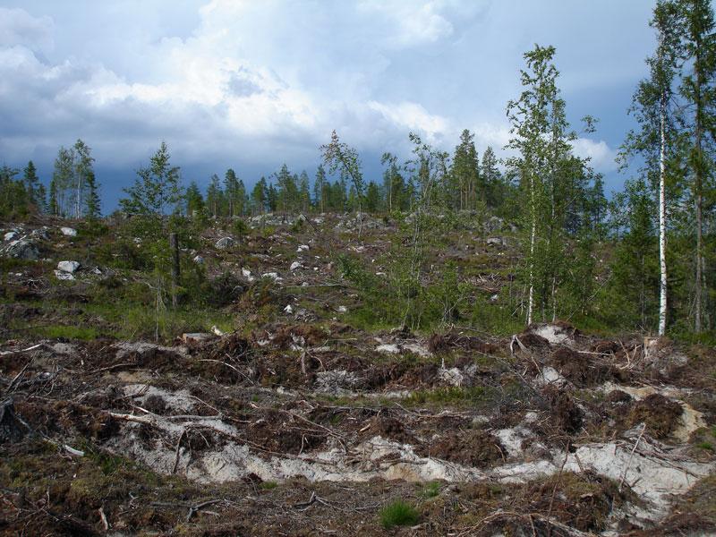 Avohakkuun jälkeistä maaperän muokkausta