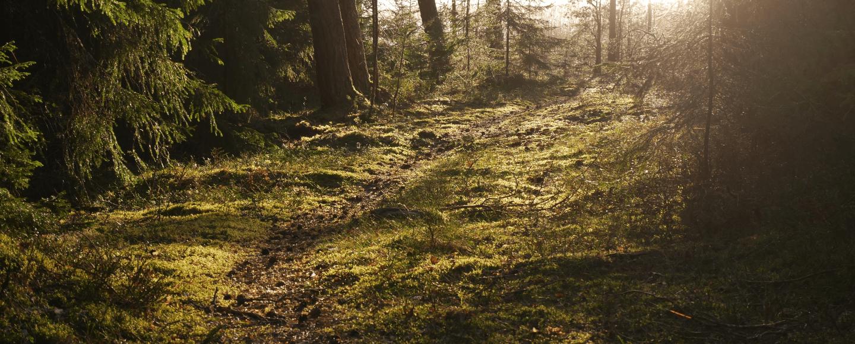 Metsäinen maisema, johon aurinko paistaa oikeasta yläkulmasta
