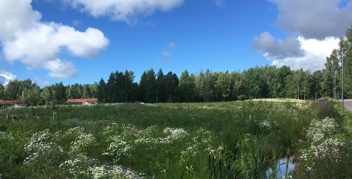 Suomalainen peltomaisema, jonka taustalla punakattoisia taloja vasten sinistä taivasta.