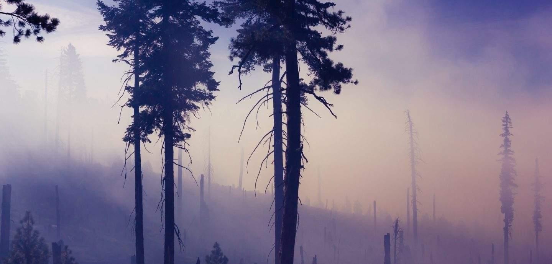 Hämyinen, sinisävyinen metsä
