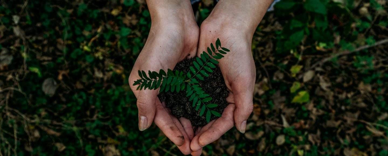 Ihminen pitelee kämmenissään kasvia