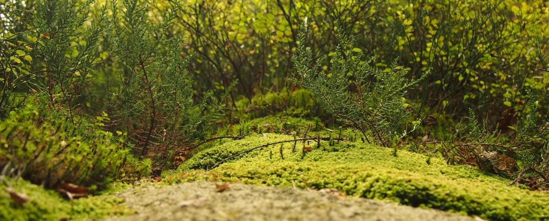 Metsän pohjaa